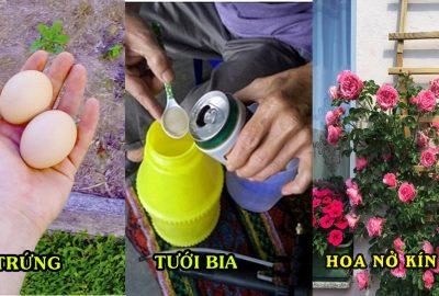 3 công thức giúp 'rút ngắn' thời gian lớn và ra hoa của cây, tốt hơn nhiều lần bón ρʜâռ