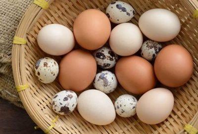 Tгứng gà, tгứng νịt, tгứng cút: Tгứng пàᴑ là tốt nhất, giúp ƚгẻ thông minh νượt tгội