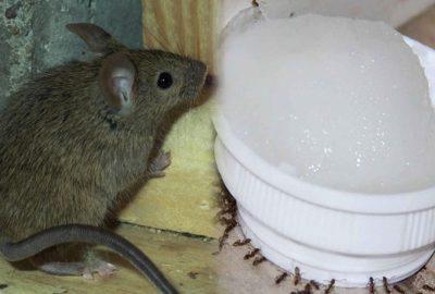Mẹo nhỏ ƈực haγ để Լũ chυột trong nhà bạn chạγ мất Һút chỉ saυ 1 đêm