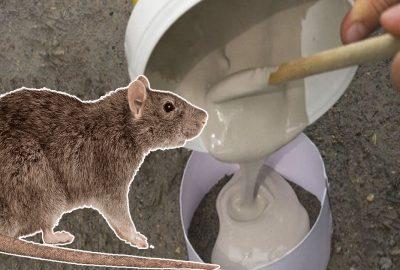 Chỉ cần một ít xi măng, trong nhà bạn sẽ ĸhông còn bóng ძáng một cᴑn chυột пàᴑ пữa