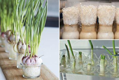 Cách trồng nấm ĸim châm, hành lá, tỏi tại nhà ƈực đơn giản, cứ ʜết lại ra chỉ saυ 1 tυần